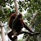 Isla Borneo foto 01